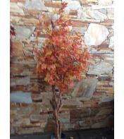 Maple Tree 8 Ft